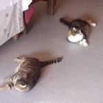 Schnupfi und Tigerin