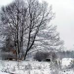 Der erste Schnee, der auch liegenbleibt