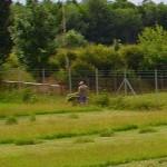 Das gemähte Gras muss natürlich auch weggefahren werden