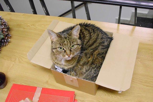 Unsere Katze Tigerin in einem kleinen Pappkarton