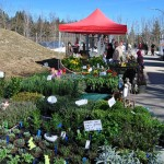Auch Blumen und Pflanzen waren im Angebot