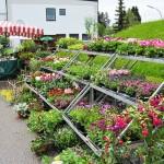 Hier der große Gärtnereistand mit Blumen, Pflanzen und Heilkräuterpflanzen aller Art